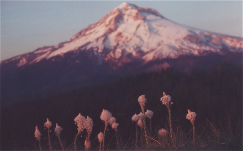 Beargrass & Alpenglow