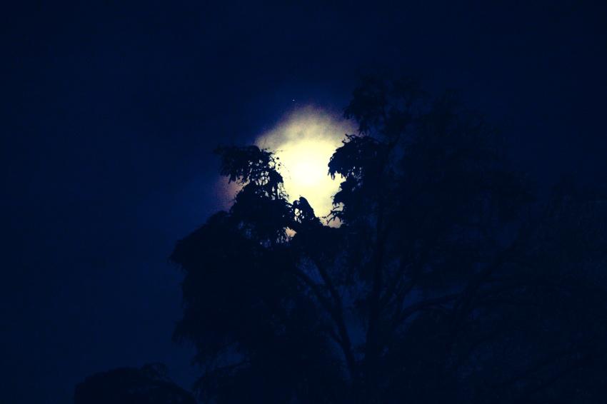 waning-fog-moon